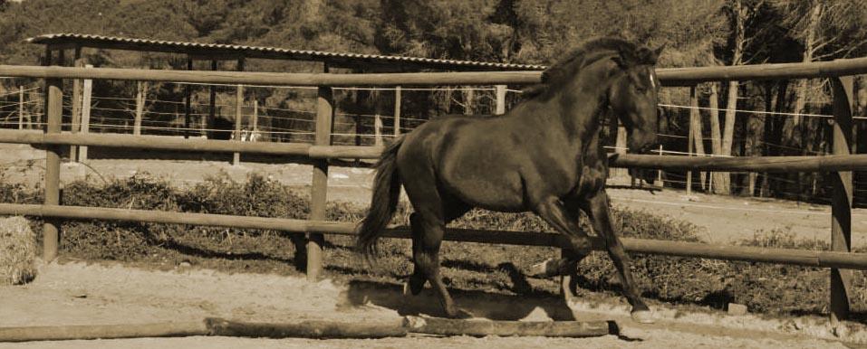 Trabajando la caballo en la doma natural